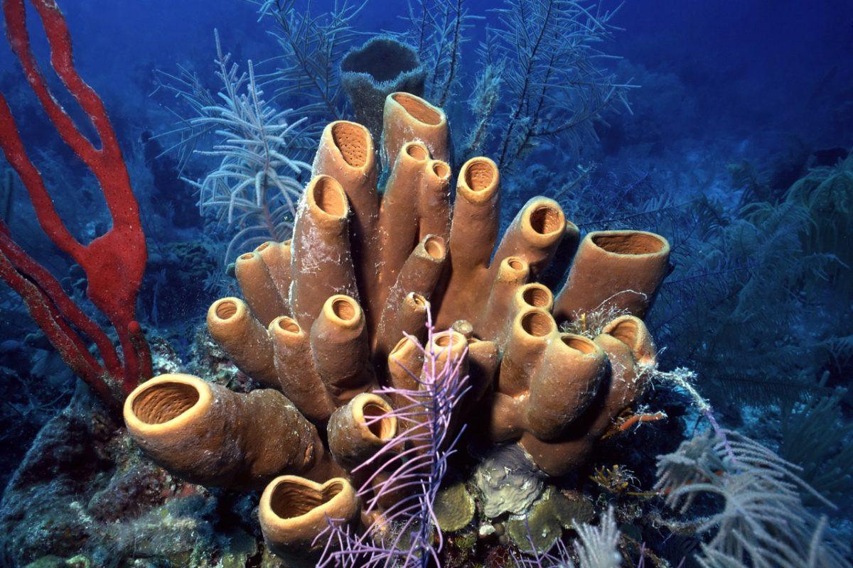 Belize Barrier Reef no longer on World Heritage in Danger list