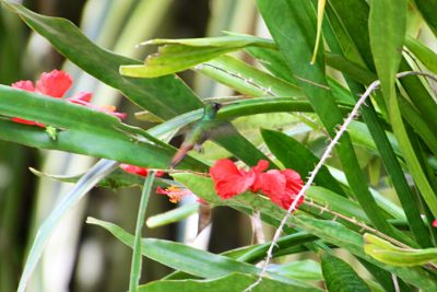 hummingbird at Belize Boutique Resort
