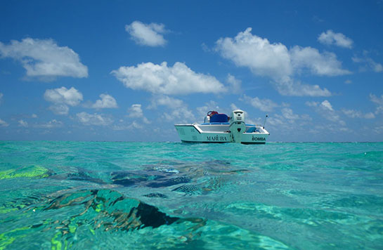 snorkeling Belize's Barrier Reef